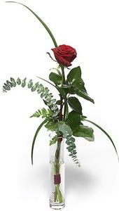 Роза красная 1шт